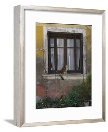 A Cat Sitting on an Exterior Window Sill in Tournus-Todd Gipstein-Framed Photographic Print