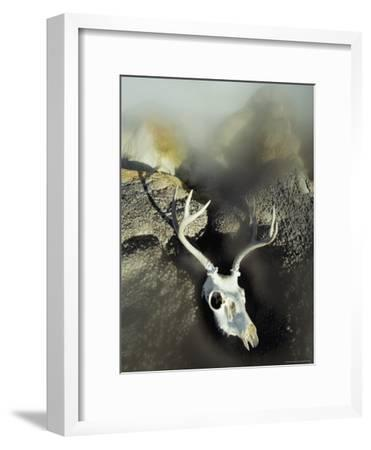 The Bleached-Out Antlered Skull of a Male Deer Lies Among Boulders Near a Thermal Hot Spring-Paul Chesley-Framed Photographic Print