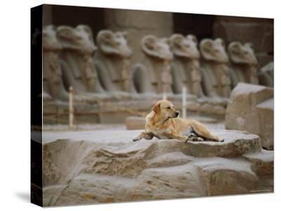 A Stray Dog Rests on the Remnants of a Pedestal-Stephen St^ John-Stretched Canvas Print