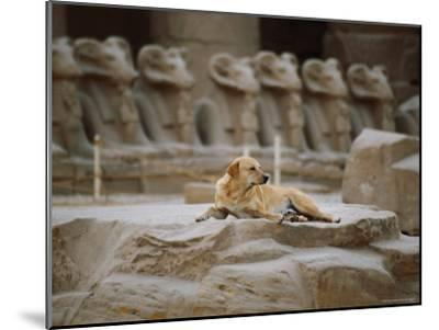 A Stray Dog Rests on the Remnants of a Pedestal-Stephen St^ John-Mounted Photographic Print