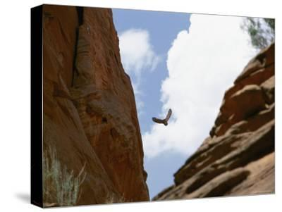 An Raven Soars Above the Gorges and Slot Canyons Along the Arizona/Utah Border-Bill Hatcher-Stretched Canvas Print