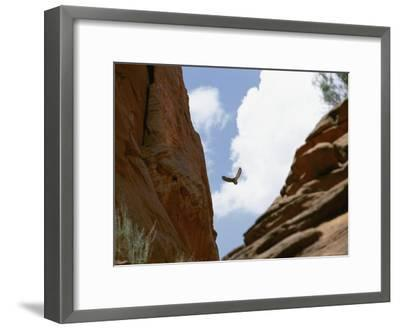 An Raven Soars Above the Gorges and Slot Canyons Along the Arizona/Utah Border-Bill Hatcher-Framed Photographic Print