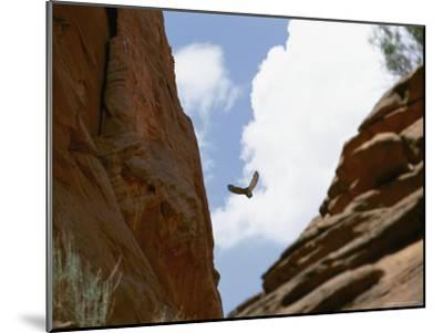 An Raven Soars Above the Gorges and Slot Canyons Along the Arizona/Utah Border-Bill Hatcher-Mounted Photographic Print
