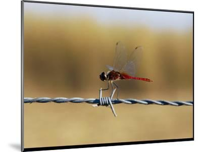 Close View of an Insect Perched on Barbed Wire-Nicole Duplaix-Mounted Photographic Print