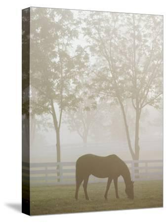 A Thoroughbred Gelding Crops the Bluegrass at the Kentucky Horse Park-Raymond Gehman-Stretched Canvas Print