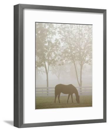 A Thoroughbred Gelding Crops the Bluegrass at the Kentucky Horse Park-Raymond Gehman-Framed Photographic Print