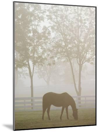 A Thoroughbred Gelding Crops the Bluegrass at the Kentucky Horse Park-Raymond Gehman-Mounted Photographic Print