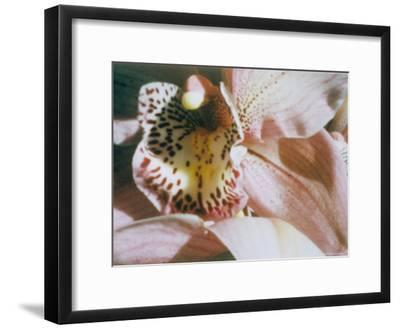 A Close View of a Flower-Sisse Brimberg-Framed Photographic Print