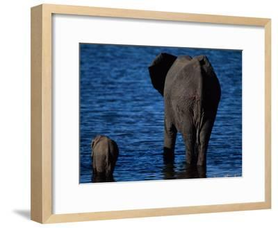 A Swimming African Elephant-Beverly Joubert-Framed Photographic Print