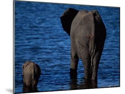 A Swimming African Elephant-Beverly Joubert-Mounted Photographic Print
