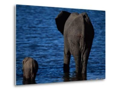A Swimming African Elephant-Beverly Joubert-Metal Print
