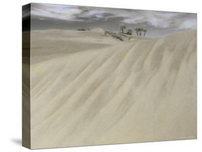 A Massive Sand Dune Dwarfs Trees on a Barrier Island-Annie Griffiths-Stretched Canvas Print