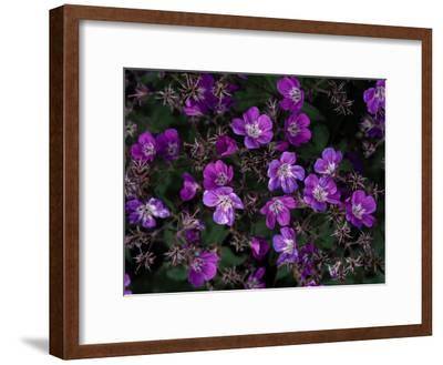 Close View of Purple Wildflowers-Mattias Klum-Framed Photographic Print
