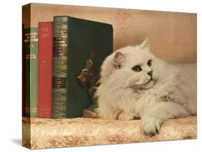 A Cat Rests Near a Stack of Books-Willard Culver-Stretched Canvas Print
