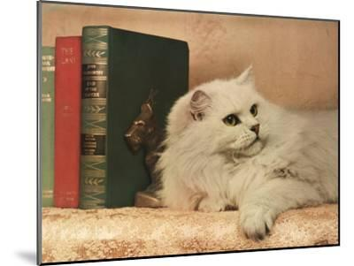 A Cat Rests Near a Stack of Books-Willard Culver-Mounted Photographic Print