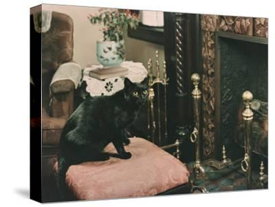 A Cat is Perched on an Ottoman in Front of a Fireplace-Willard Culver-Stretched Canvas Print