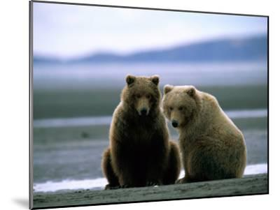 Grizzly Bear Cubs Pose for the Camera-Joel Sartore-Mounted Photographic Print