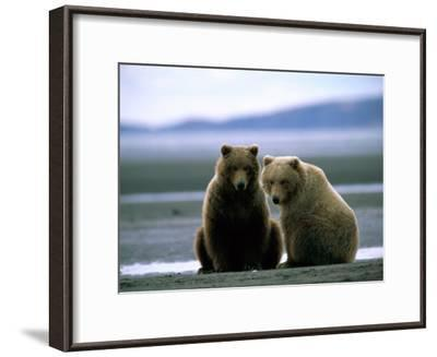 Grizzly Bear Cubs Pose for the Camera-Joel Sartore-Framed Photographic Print