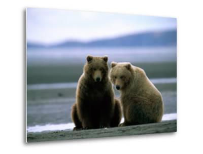 Grizzly Bear Cubs Pose for the Camera-Joel Sartore-Metal Print