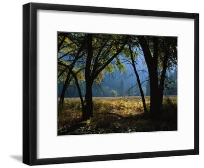 Black Oak Trees Near a Meadow in Yosemite National Park-Marc Moritsch-Framed Photographic Print