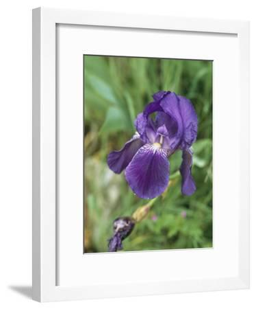 Close View of an Iris-Nicole Duplaix-Framed Photographic Print