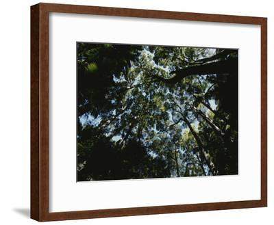 View Looking up into the Forest Canopy-Nicole Duplaix-Framed Photographic Print