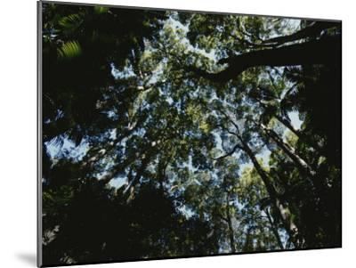 View Looking up into the Forest Canopy-Nicole Duplaix-Mounted Photographic Print