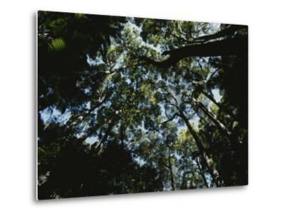 View Looking up into the Forest Canopy-Nicole Duplaix-Metal Print