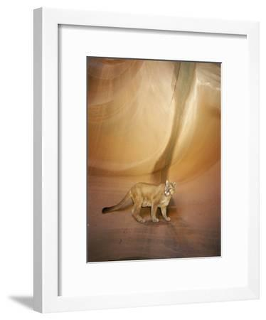Mountain Lion on Rock Formation-Norbert Rosing-Framed Photographic Print