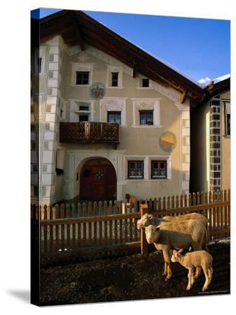 Sheep in Village, Graubunden, Switzerland-Walter Bibikow-Stretched Canvas Print
