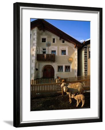 Sheep in Village, Graubunden, Switzerland-Walter Bibikow-Framed Photographic Print