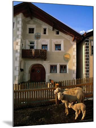 Sheep in Village, Graubunden, Switzerland-Walter Bibikow-Mounted Photographic Print