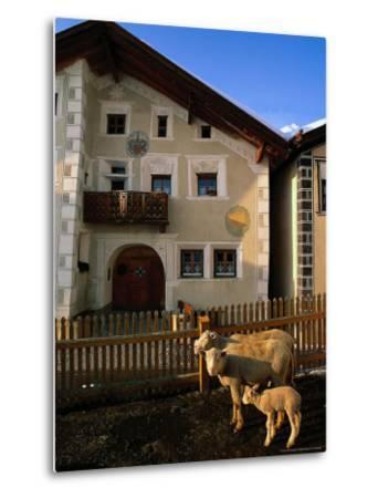 Sheep in Village, Graubunden, Switzerland-Walter Bibikow-Metal Print