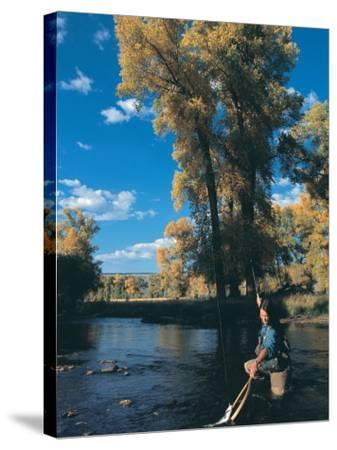 Woman Fly Fishing in Co, Holding Fish-Paul Gallaher-Stretched Canvas Print