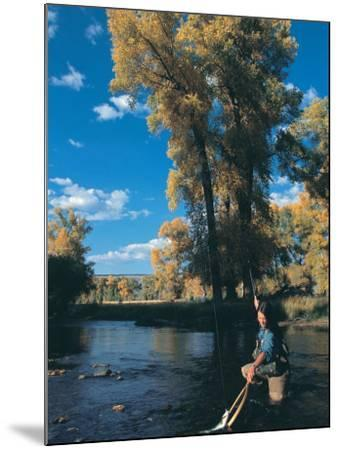 Woman Fly Fishing in Co, Holding Fish-Paul Gallaher-Mounted Photographic Print