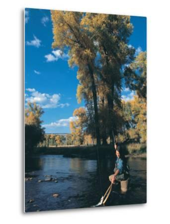 Woman Fly Fishing in Co, Holding Fish-Paul Gallaher-Metal Print