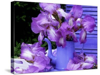 """Bearded Iris """"Blue Shimmer"""" in Blue Coffee Jug on Table with Blue Shutter in Background-James Guilliam-Stretched Canvas Print"""