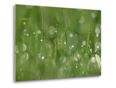 Water Droplets on Grass, Close-up Detail Yorkshire, UK-Mark Hamblin-Metal Print