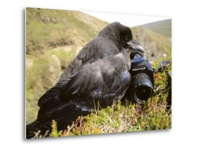 Common Raven, and Camera, Iceland-Philippe Henry-Metal Print