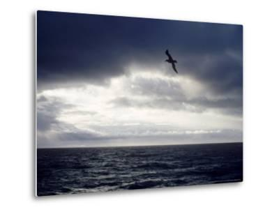 Southern Giant Petrel at Sea, Argentina-Mary Plage-Metal Print