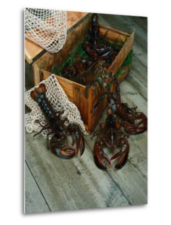 Lobsters-Martin Fox-Metal Print