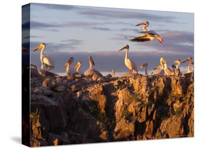 Lake Scenes, Birds at Sunset-Keith Levit-Stretched Canvas Print