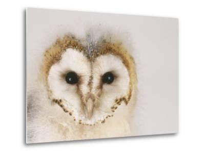 Barn Owl, Portrait of Face-Les Stocker-Metal Print