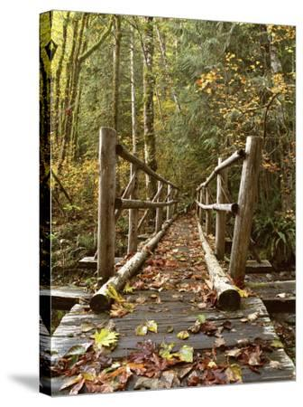 Olympic National Park, Washington, USA--Stretched Canvas Print