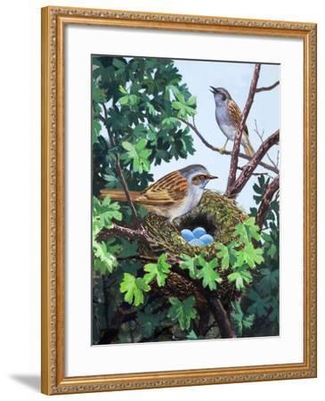 Sparrows Nest--Framed Giclee Print