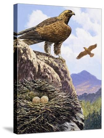 Golden Eagles Nest--Stretched Canvas Print