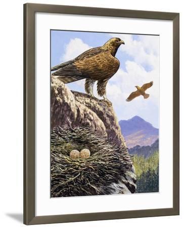 Golden Eagles Nest--Framed Giclee Print