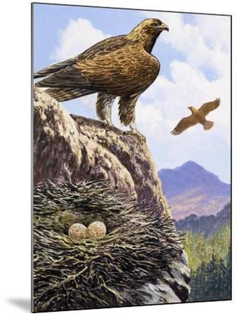 Golden Eagles Nest--Mounted Giclee Print