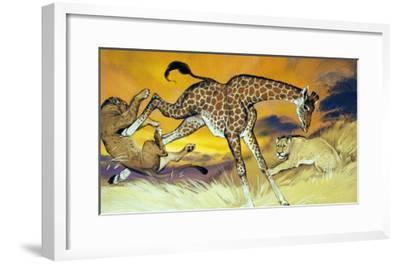 Giraffe Kicking Lion-Angus Mcbride-Framed Giclee Print