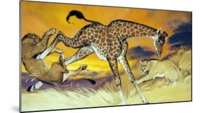 Giraffe Kicking Lion-Angus Mcbride-Mounted Giclee Print